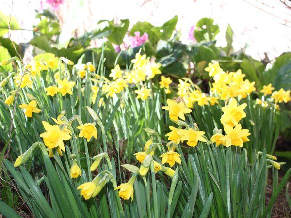 Arrivée timide du printemps ?