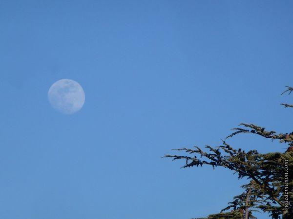Le ciel vendredi dans la forêt des cèdres (Luberon)