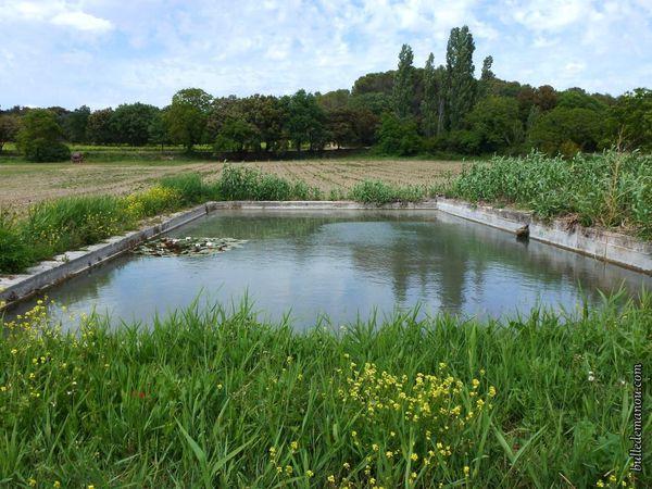 Le bassin au mois de mai