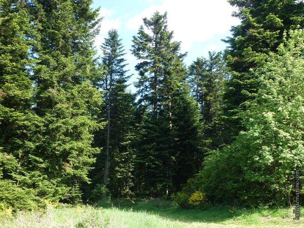 Une forêt fraîche...