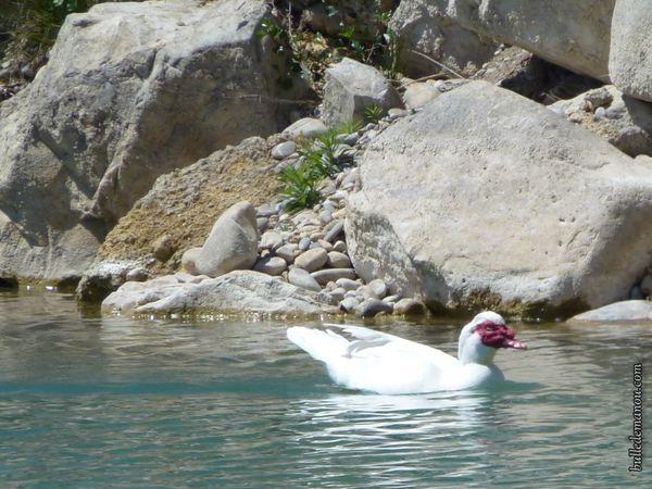 Des oiseaux d'eau sur le lac...