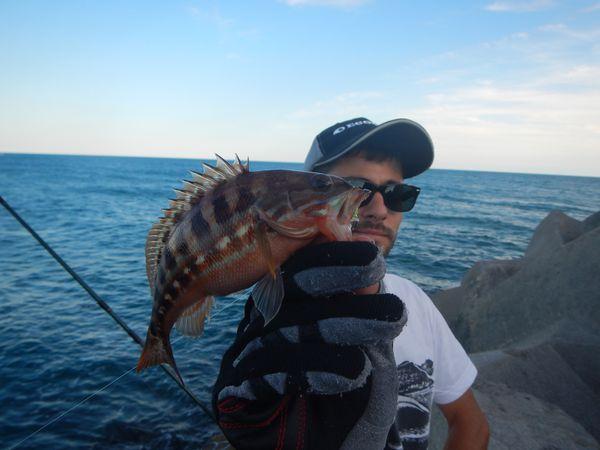 La pêche du serran