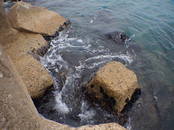 l'été pêcher le sar en rockfishing