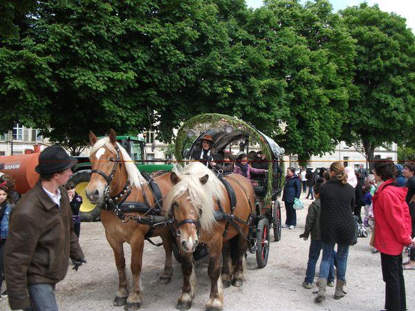 """""""La Municipalité de Maxéville a fait le choix de mettre le cheval au centre de la ville. Ainsi les écuries de """"La Dame"""", nom donné en hommage au cheval du duc de Lorraine, René II, se trouvent à côté de la Mairie, près du Parc... Réintroduire l'animal au coeur de la vie urbaine est une formidable opportunité d'humaniser la cité... """"Quand la plus belle conquête de l'Homme réinvestit la ville, c'est la ville qui investit dans l'avenir""""..."""