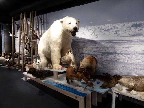 un petit tour à l'office du tourisme où se trouve le siège de l'ancienne Société Royale de l'ours polaire...