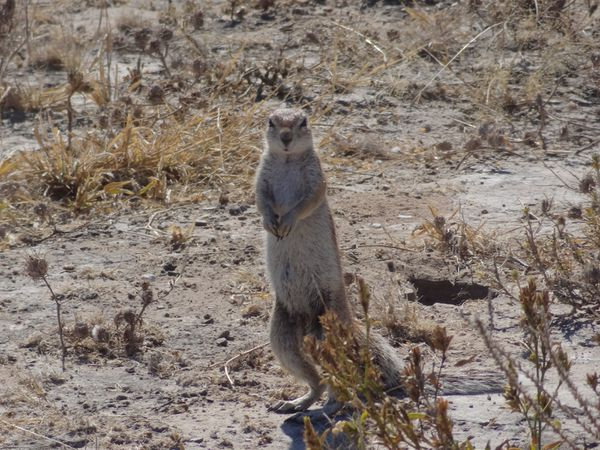 Acte 5.1/ Africa Trip / South Africa - Botswana