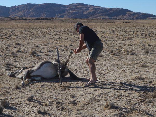 Jean Marc en sauveteur d'Oryx