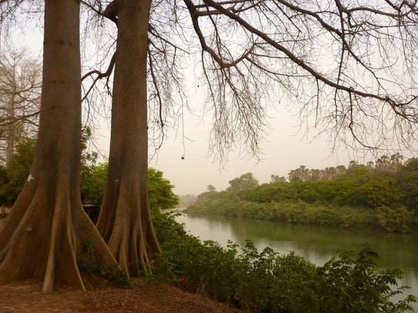 le fleuve Gambie