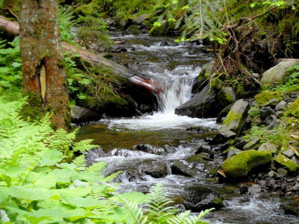 Le Ruisseau de Cliergue