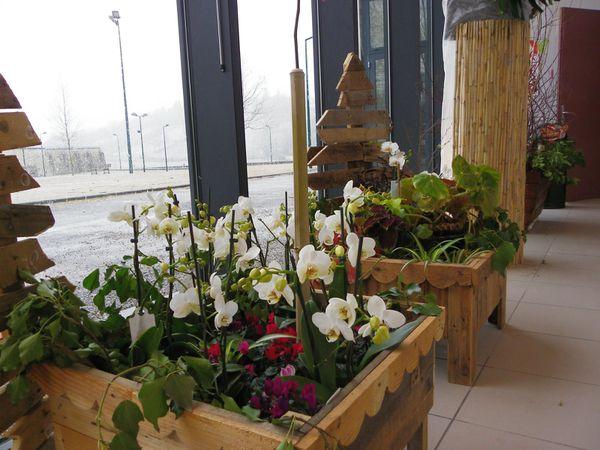 les orchidées sont bien au chaud , dehors: la neige...(Frédérique)