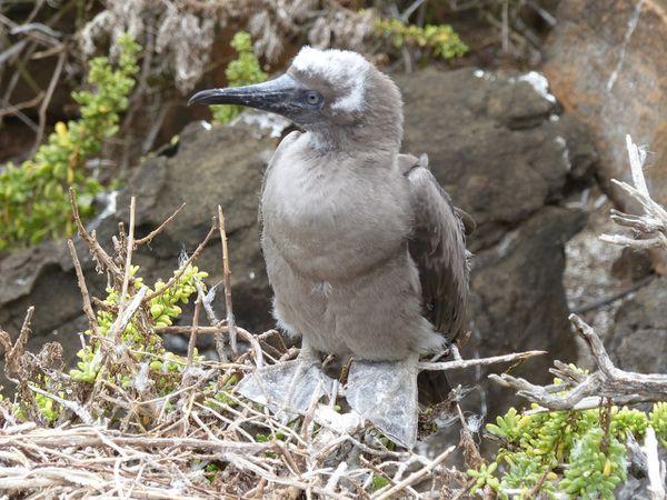 Les Galápagos: Une expérience UNIQUE