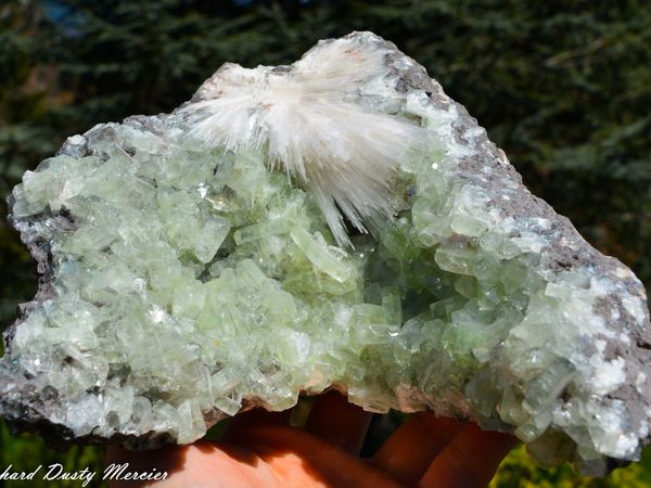 Scolecite and green Apophyllite from Lonavala Mine, Poonah, Maharashtra, India (size: Museum)