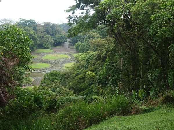 Randonnée à Guayabo