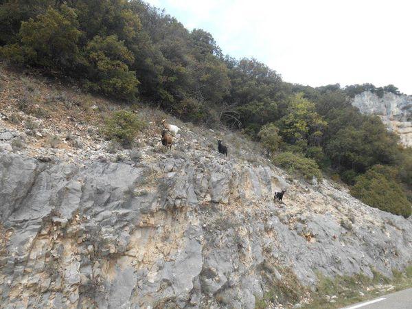 1 et 2- Les copines de Bruno. 3- Petite vue sur les Gorges. 4- Passage des tunnels.