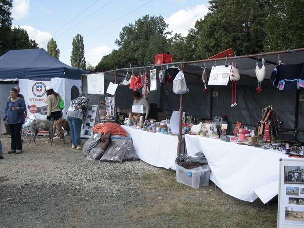 Le petit stand pour nos amis lévriers d'Espagne