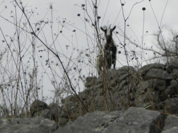 Restauration de murs de soutènement à Digne-les-Bains