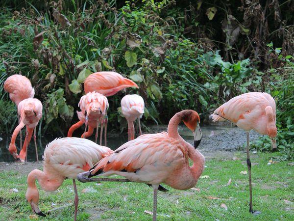 Jardin des plantes #animals