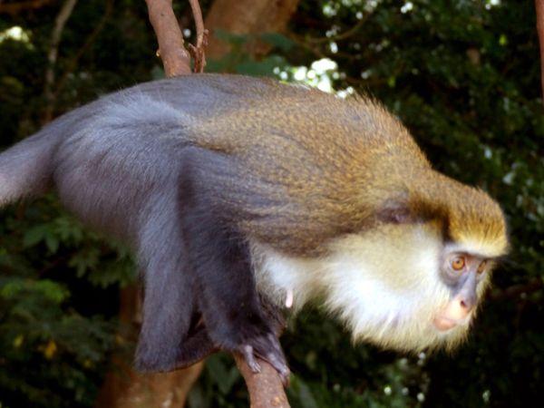 Week end à Man – Châpitre 5 : Cascades, singes et autres curiosités de la ville