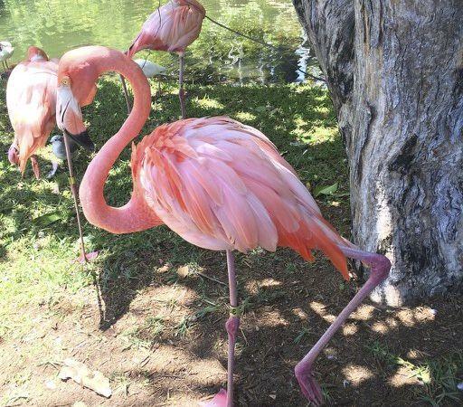 Flamingo Style �