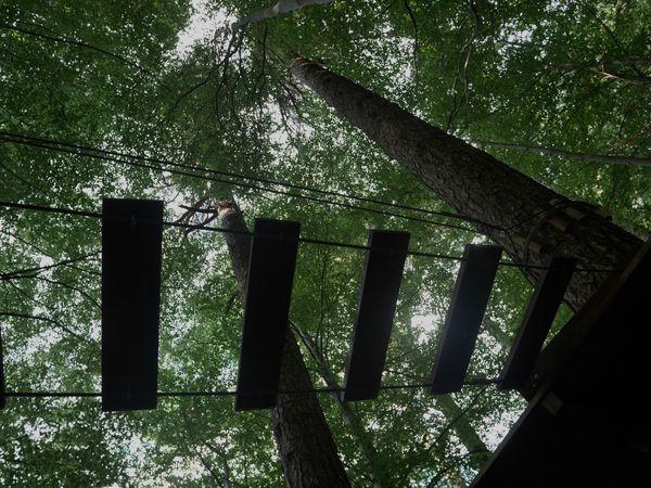 Forêt de Vizzavona. Centre Corse