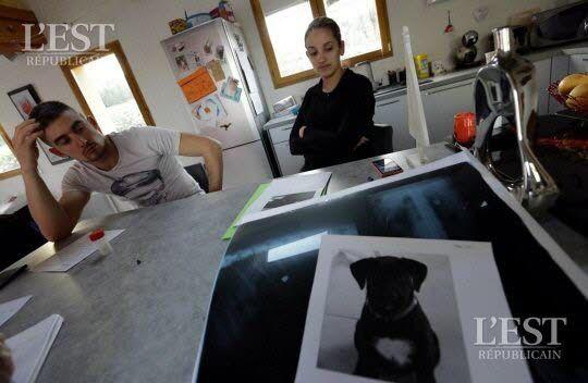 Haute-Saône : la chienne Pantoufle tuée par une balle de 9 mm