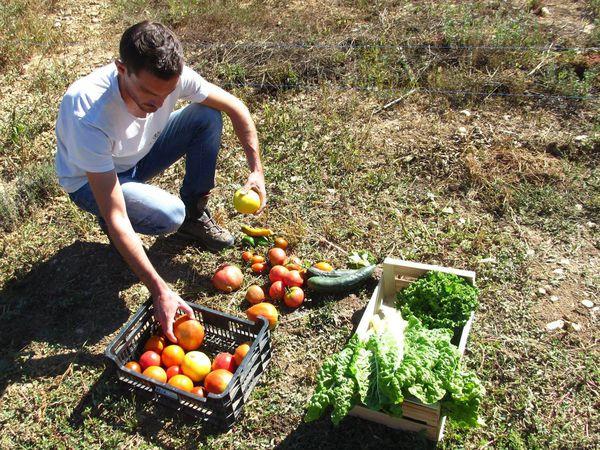 Moriez : Les tomates d'Aymeric , variétés anciennes et diversité
