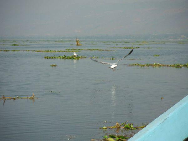 Lac Inlé, deuxième jour