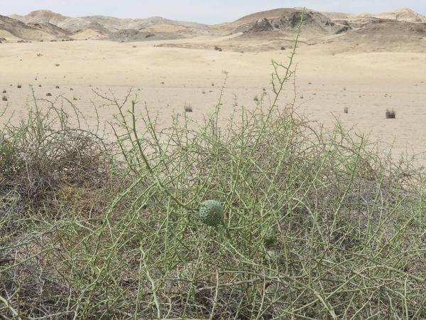 Plantes du désert - Promenade en mer