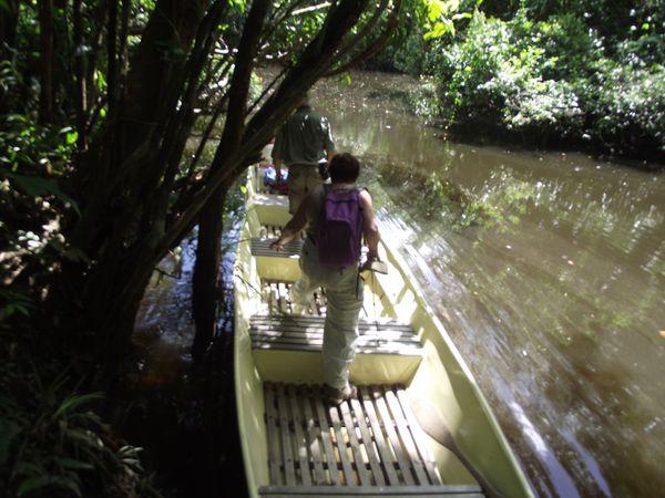 Nous avons passé plus de trois heures dans la superbe crique Saulnier où le guide avait beaucoup de mal à frayer un passage à sa pirogue au milieu des arbres couchés. A l'aller ça passait à peu près.......