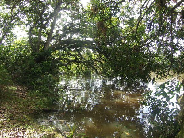 Arrêt sur l'île aux lépreux (bagnards isolés) puis remontée du fleuve.