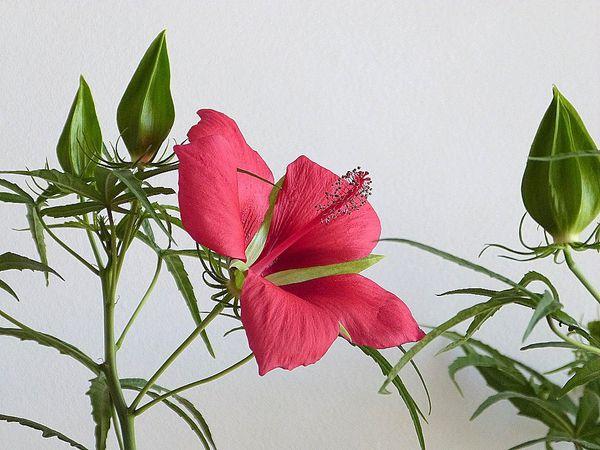 Première fleur ce matin