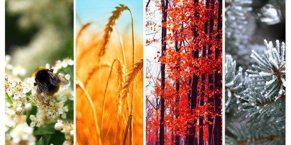 A travers des champs et des arbres