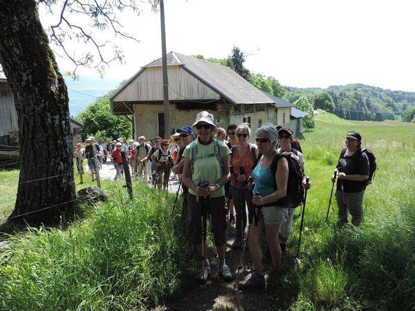 Le groupe à l'arrêt près d'un troupeau de vaches de races Salers et Charolais