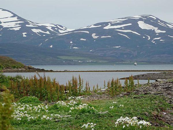 Eyjafjördur (Fjörd d'Akureyri), Nord Islande, 07/16