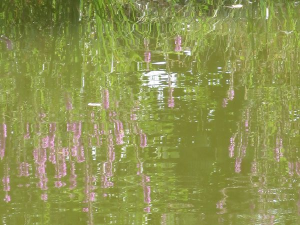 les plantes des berges, à l'endroit ou en reflets