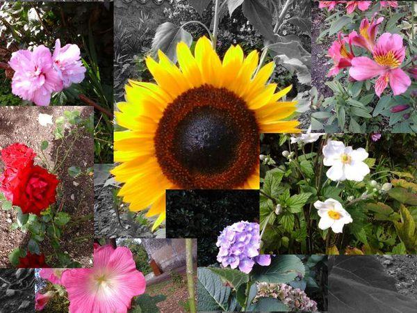 Un jardin avec de jolies fleurs pour vous détendre ...