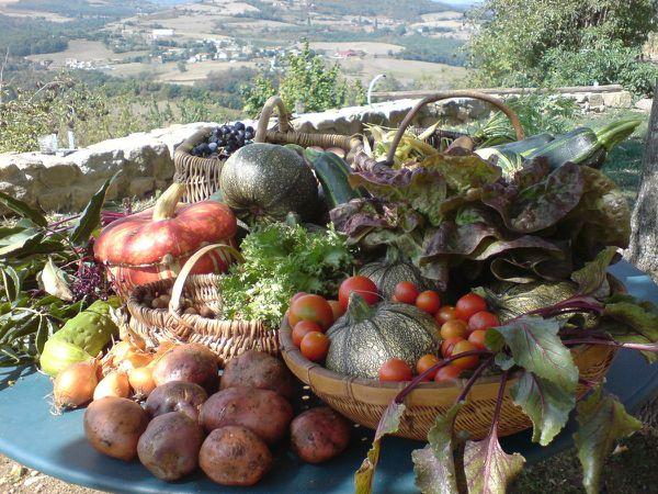 Légumes de la ferme Plus Bio que Bio:100% NATUREL :)