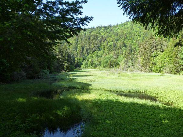 Diaporama : mon séjour au Devin (gîte et étang-tourbière). Date : 7 et 8 juin 2014.