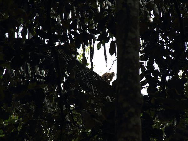 Un tour en Amazonie bolivienne