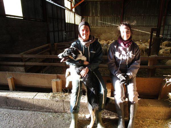 Pauline et Agathe s'occupent de la ferme qui accueille 250 moutons