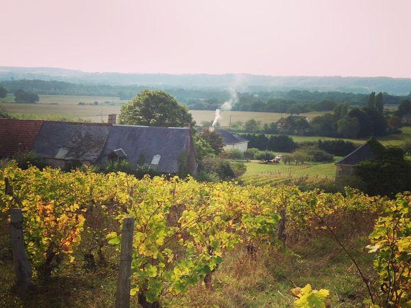 Dans les vignes vers le bourg&#x3B; une maison de vigne&#x3B; panorama avec au premier plan les vignes de Jasnières