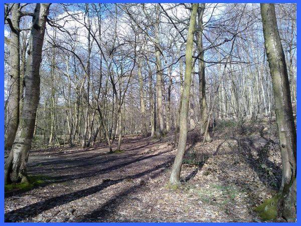 Trailball de Pâques dans la forêt de Meudon.