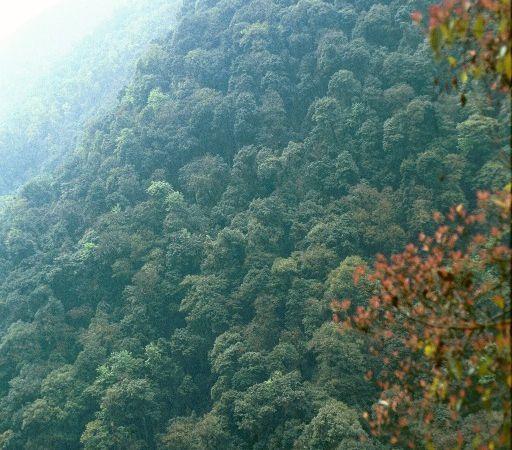 Au Sikkim et à Darjeeling