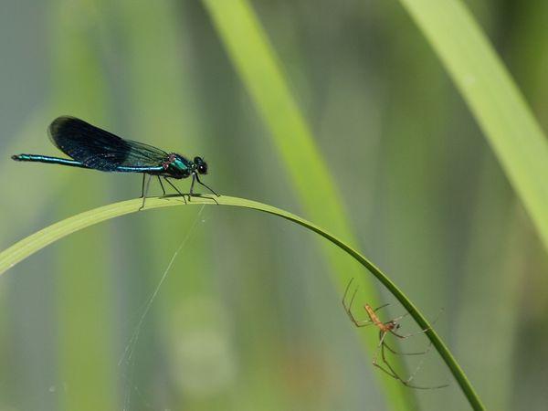 Les jardins du château de la Javelière, un paradis pour les insectes
