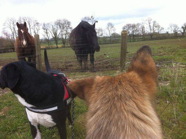 """Milagro découvre le vent fort qui souffle dans ses oreilles pendant que Gally vaque à ses reniflages habituels. De retour en bas, le coucou aux chevaux se fait mais de loin, avec quelques grognements signifiant """"ils font un peu peur quand même"""" !"""