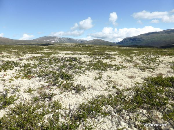 Le parc national du Dovrefjell