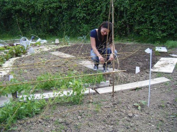 Agriculture urbaine en entreprise .... lancez vous, faites comme Maisons du Monde !