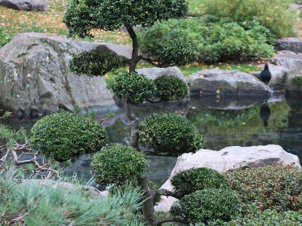 Autumn walk in Holland Park &amp&#x3B; Kyoto Garden