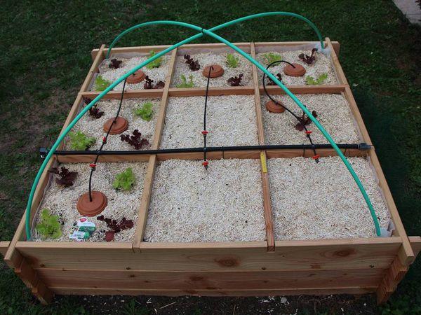 Arrosage : Installation des Ollas dans le potager