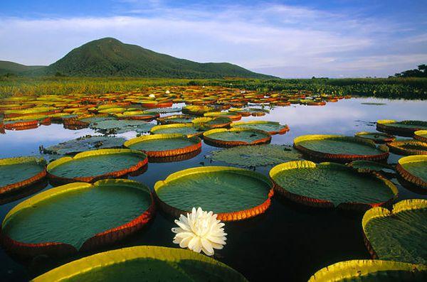 Grandeur et splendeur au Pantanal.